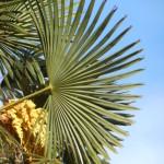 palma (2)
